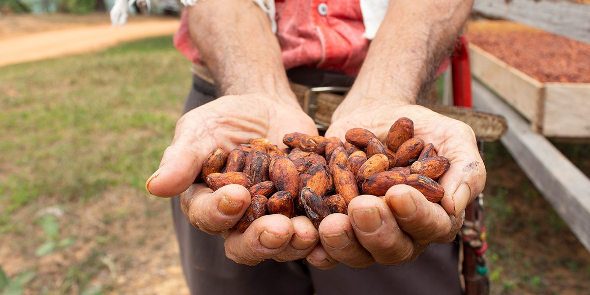 An internally displaced man shows cocoa beans produced with the support of JRS.